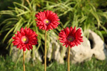 Immagine di Gerbera singola rossa, h. cm 53