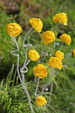 Immagine di Camelia x3 gialla, h. cm 58