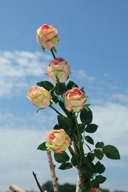 """Immagine di Bocciolo rosa """"AIDA"""", h.90cm bianco"""