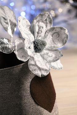 Immagine di Magnolia argento, h.cm70