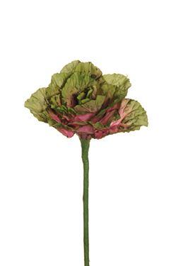 Immagine di Cavolo ornamentale verde,  34 cm