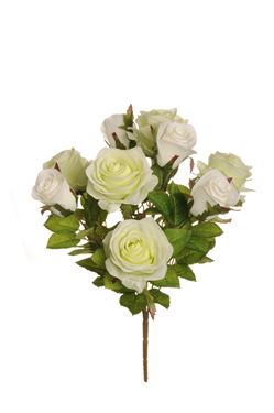 Immagine di Bush rose, 9 fiori,  bianco, H43 cm