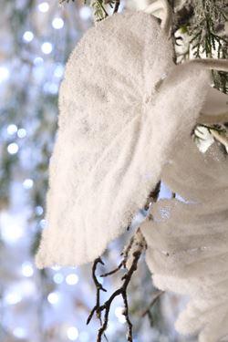 Immagine di Foglia larga snow, h.cm66
