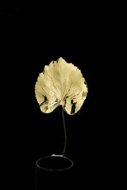 Immagine di Foglie begonia metallic oro,  h.cm10