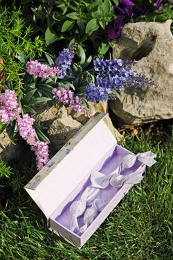 Immagine di Scatole make up lavanda rettangolare, cm20x7xh.3.5