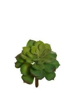Immagine di Echeveria, verde, d.cm.12x16h