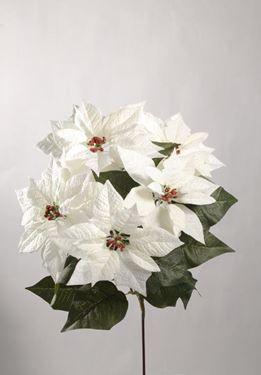 Immagine di Bush Poinsettia x5, h.cm46 bianco