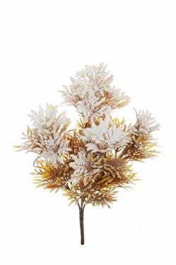 Picture of Bush x 5 cineraria senecio innevato, h.31cm