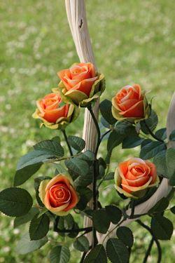 Picture of Rosa h.71cm (+chiusa) giallo/arancio