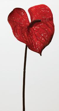 Picture of Anturium porcelain, h.cm75 rosso