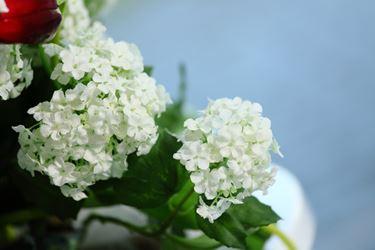 Picture of Viburnum crema h.cm76