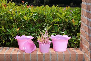 Picture of Coprivaso DOLLY in plastica rosa