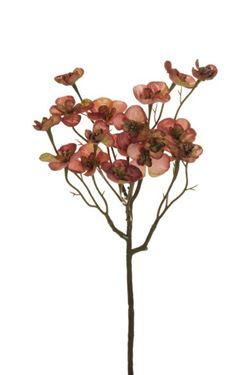 Immagine di Begonia ramo, rosa, h.cm.57