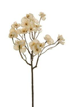 Immagine di Begonia ramo, panna, h.cm.57