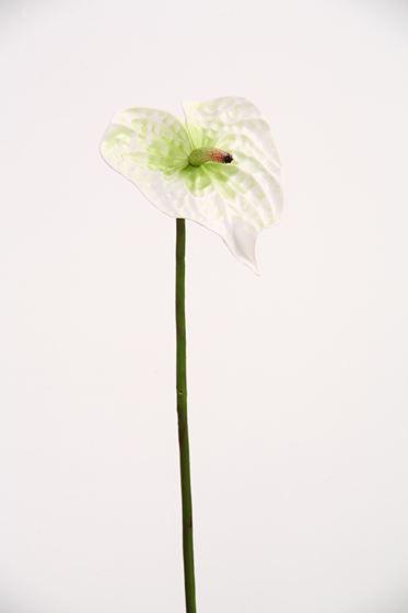 """Picture of Anthurium """"Vitrum"""" h.63cm bianco"""