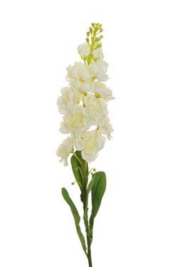 Picture of Violaciocca, bianco, h.81cm