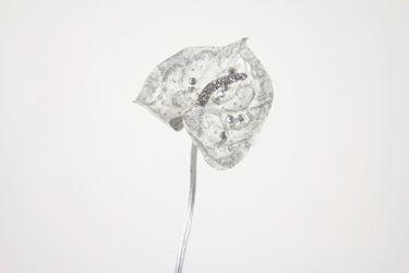 Picture of Anthurium argento, h.cm65