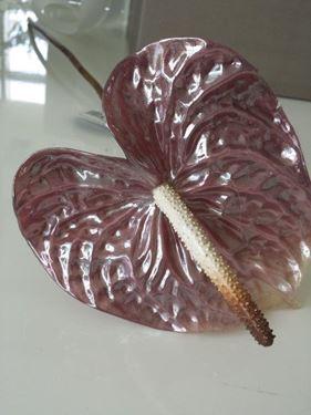 Picture of Anthurium Vitrum lilla h.cm61