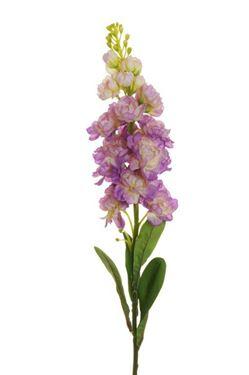 Picture of Violaciocca, lilla, h.81cm