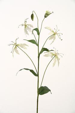 Immagine di Gloriosa h.105cm crema