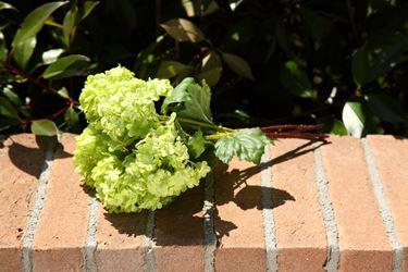 Immagine di Mazzetto viburnum x5, h.33cm verde