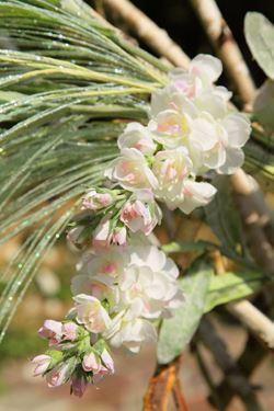 Immagine di Violaciocca, h.72cm crema/rosa