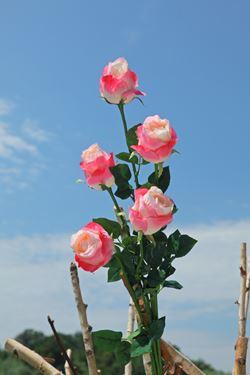 """Immagine di Bocciolo rosa """"AIDA"""", h.90cm rosa"""