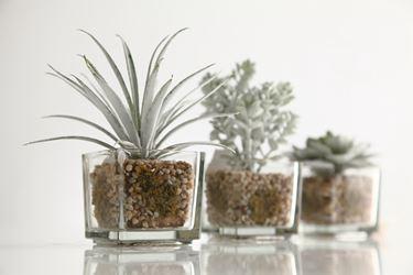 Immagine di Aloe in vaso di vetro, verde/bianco,altezza 18 cm