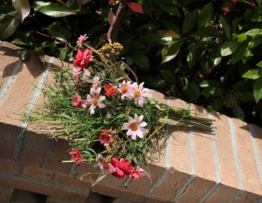 Immagine di Mazzetto margherite rosa e fili d'erba h.cm44