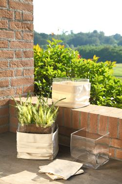 Picture of Box 6 eriche in terra assortite, h.cm27.5