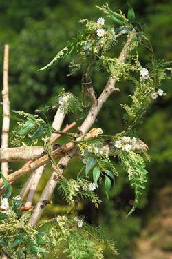 Immagine di Ghirlanda fiori selvatici h.180cm 6p