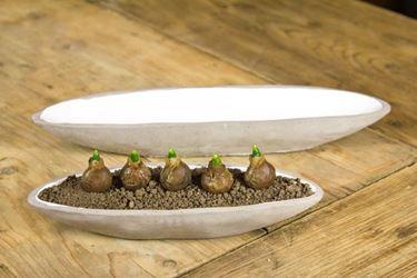 Immagine di Ciotola Ovale bassa, cemento, piccola, tortora, 28x9xH4.5cm